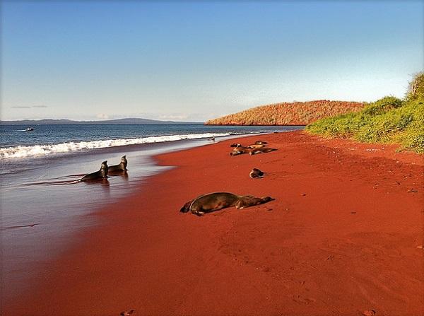 Red Sand Beach, Rabida, Galapagos 1