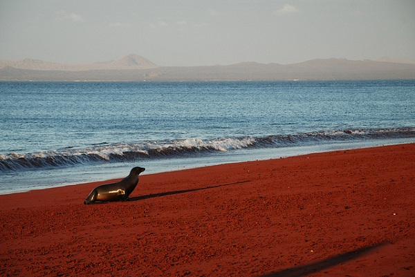 Red Sand Beach, Rabida, Galapagos 2
