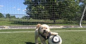 dog acting like human 1