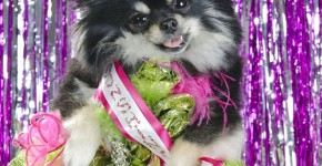 dog pageant