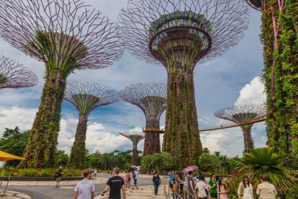 singapore-gardens-by-the-bay-supertree-cloud-forest-3