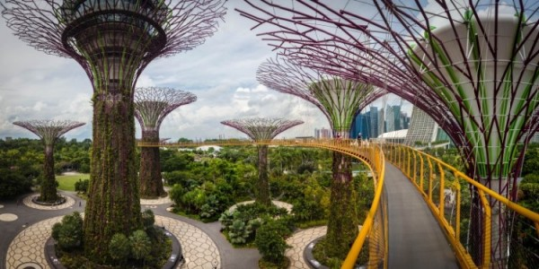 singapore-gardens-by-the-bay-supertree-cloud-forest