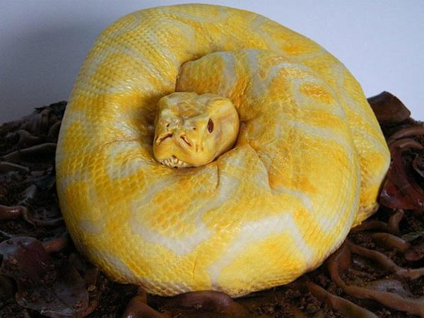 the snake cake
