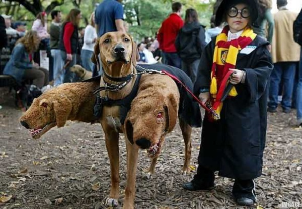 cerberus-best-halloween-costume-ever