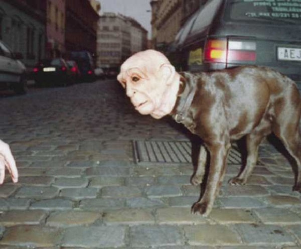 Scary Halloween Costumes Dog