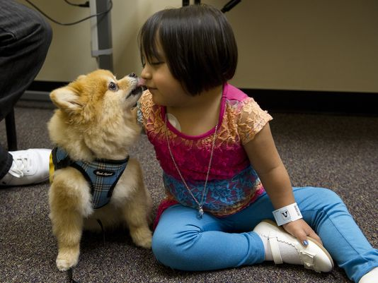 dogs detect human diseases