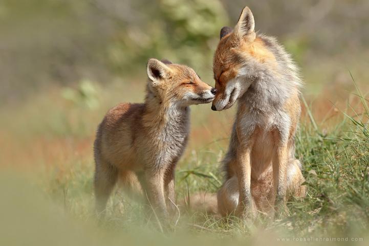 fox-hugging.jpg