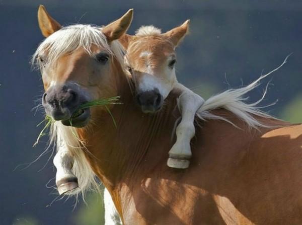 horses hugging