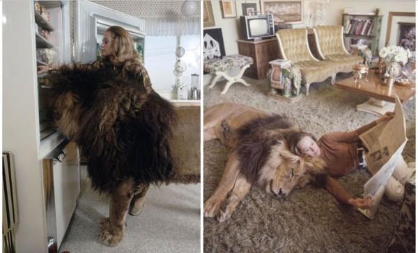 tippi hendren and lion 2