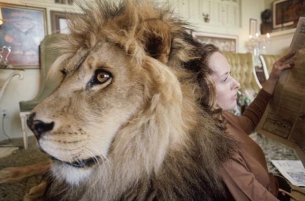 tippi hendren and lion