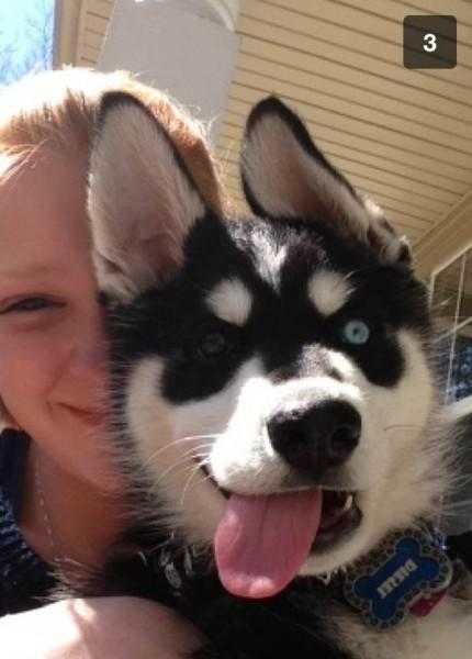 dog face 11