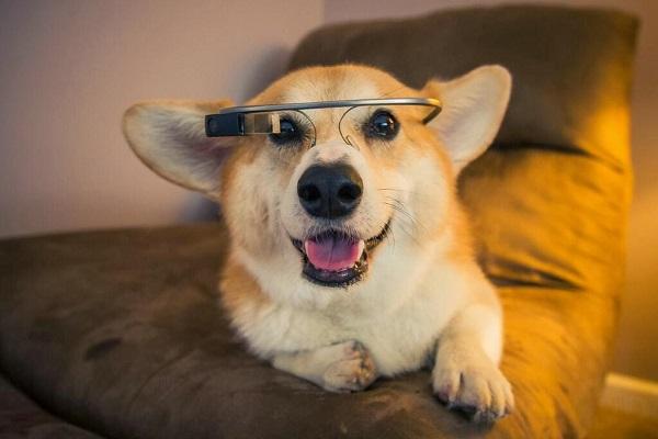 dog gadget 1