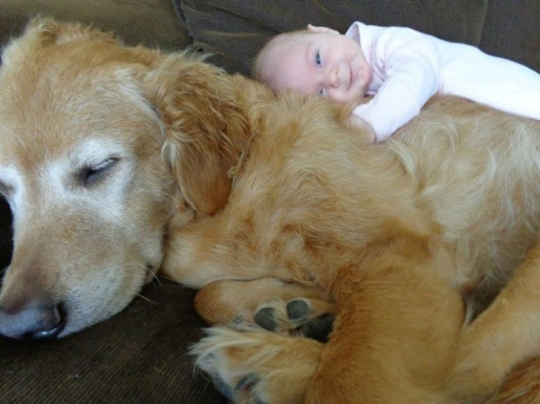 dogs and babies 1