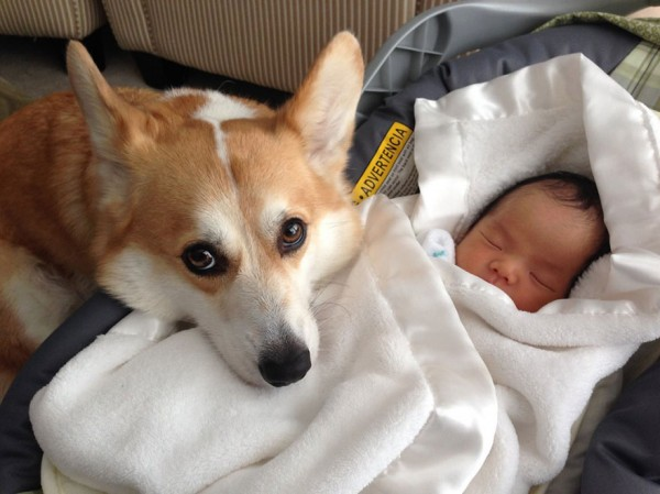 dogs and babies 3