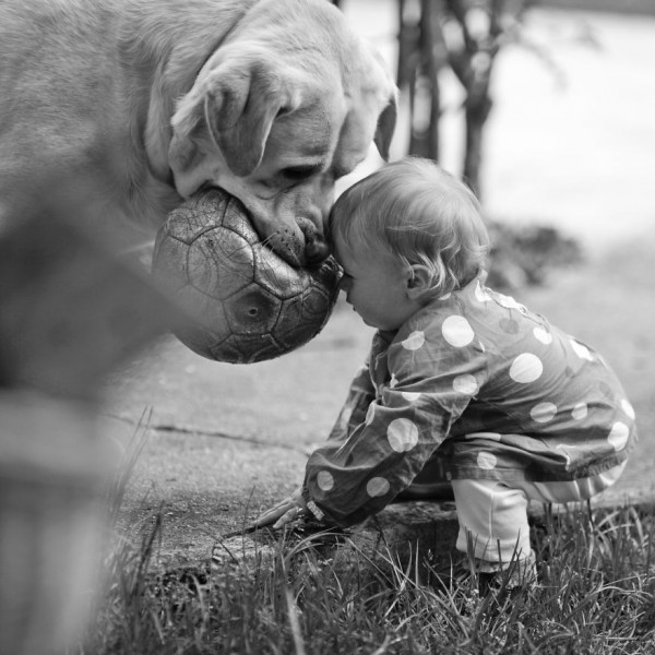 dogs and babies 6