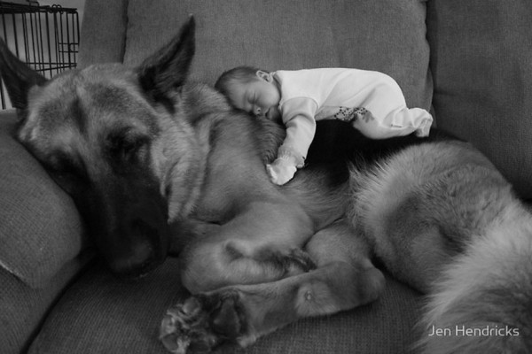 dogs and babies 7