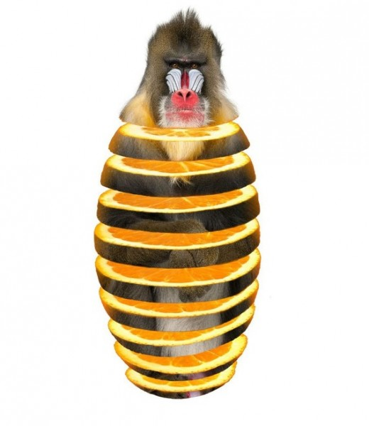 mandrill orange