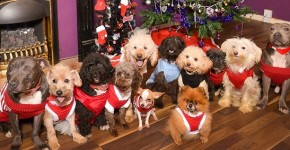 12 dogs of christmas 1