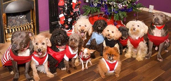 12 dogs of christmas 1