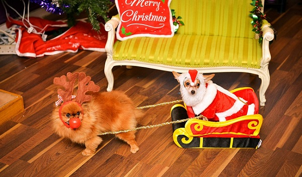 12 dogs of christmas 2