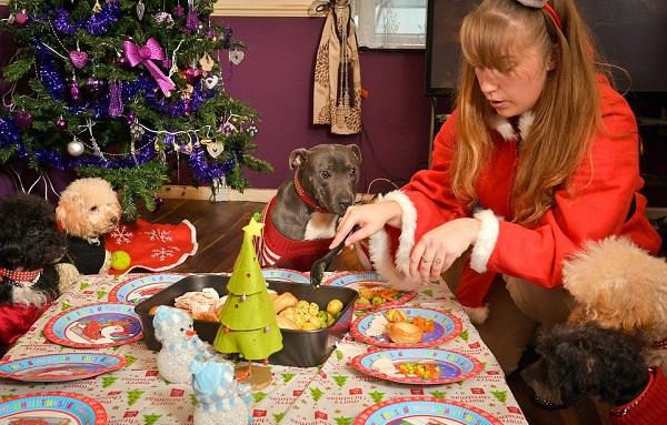12 dogs of christmas 3