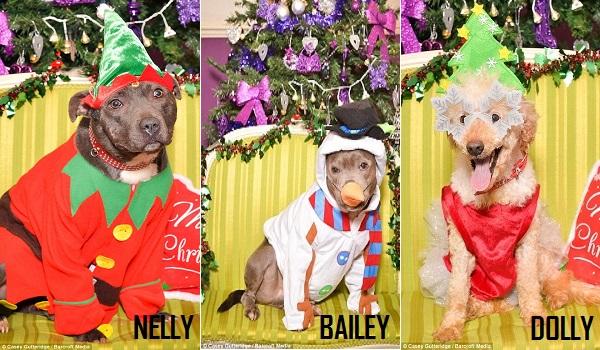 12 dogs of christmas 4.10