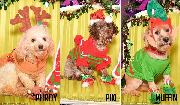 12 dogs of christmas 4.4