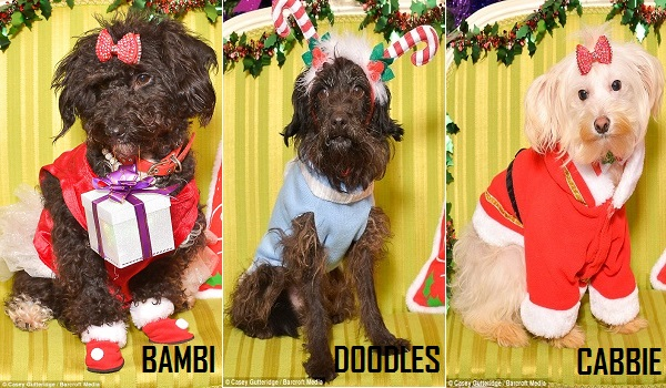 12 dogs of christmas 4.7
