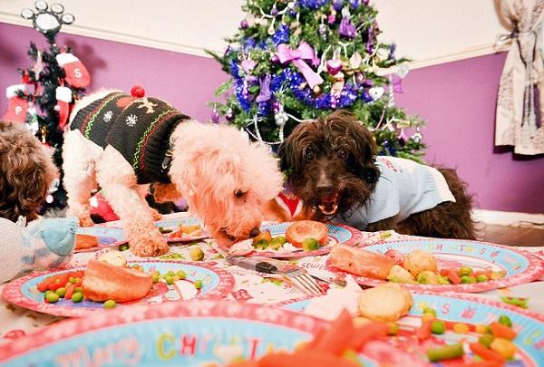 12 dogs of christmas 6