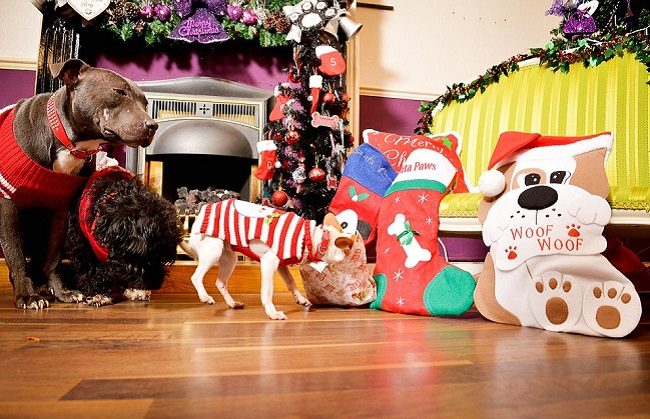 12 dogs of christmas 7