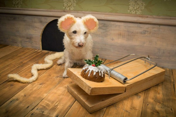 dog dressed as animal 1