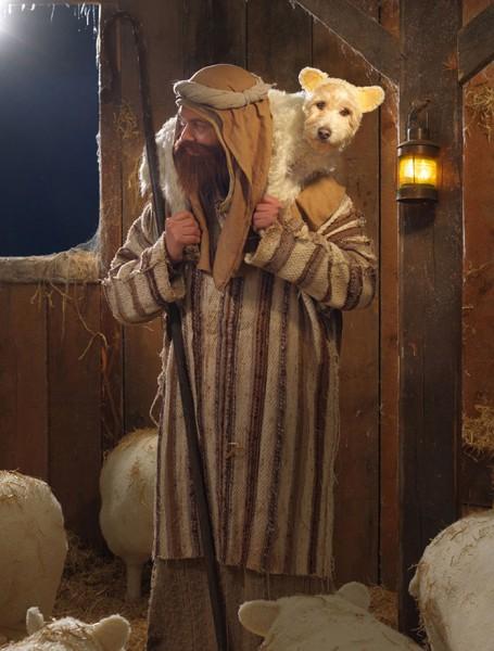 dog dressed as animal 6