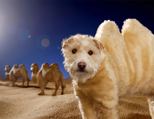 dog dressed as animal 9