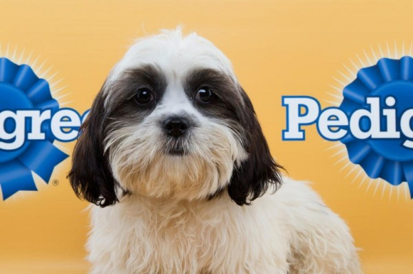 cara puppy bowl