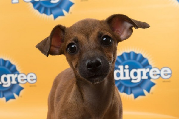 cheyenne puppy bowl