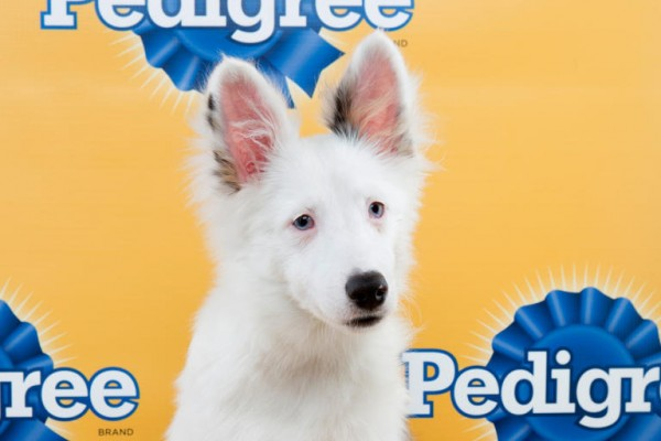 chicklet puppy bowl