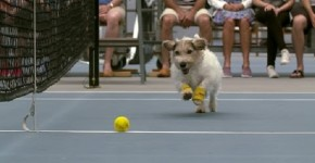 Watch Out Human Ball Boys! Dogs Are Now Dominating Your Job