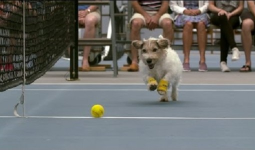 dog in tennis 4