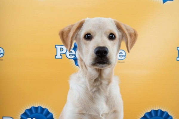 dougie puppy bowl