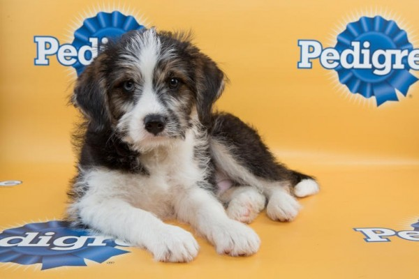 puppy bowl blue