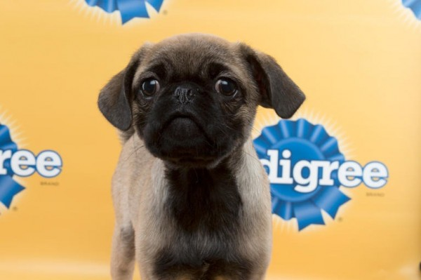 puppy bowl bowser
