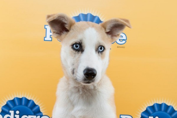 puppy bowl coveia