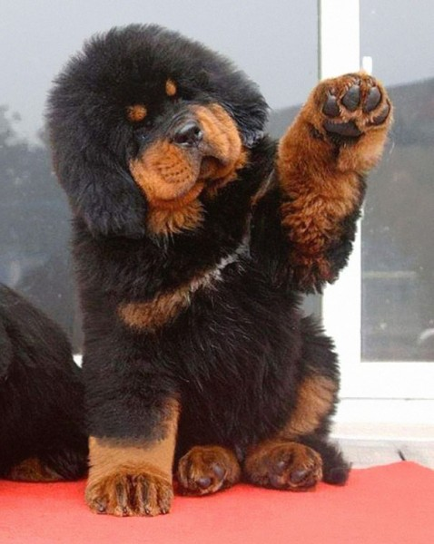 dog teddy bear 2