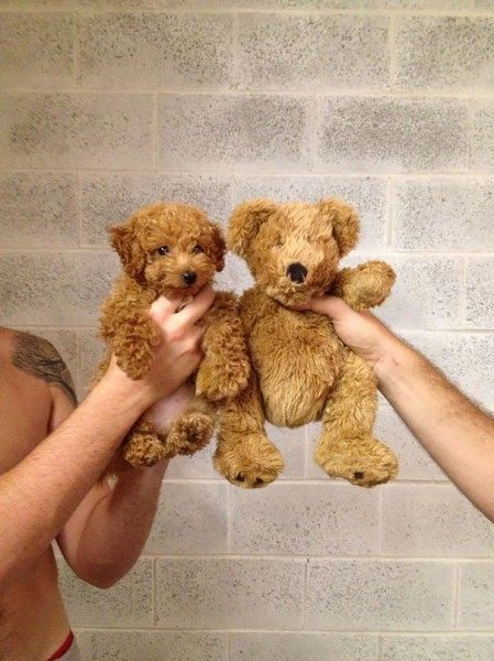 dog teddy bear 5