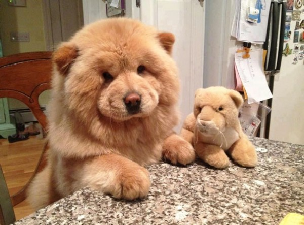 dog teddy bear 7