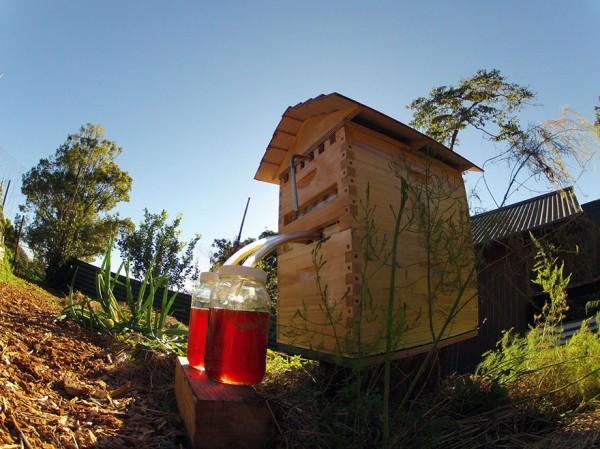 flow hive 5