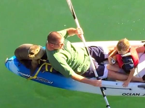 sea lion kayaking 1