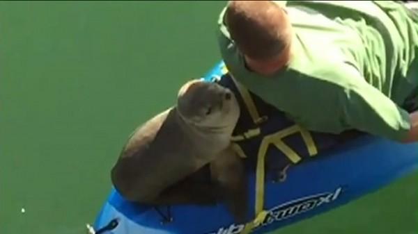 sea lion kayaking 2