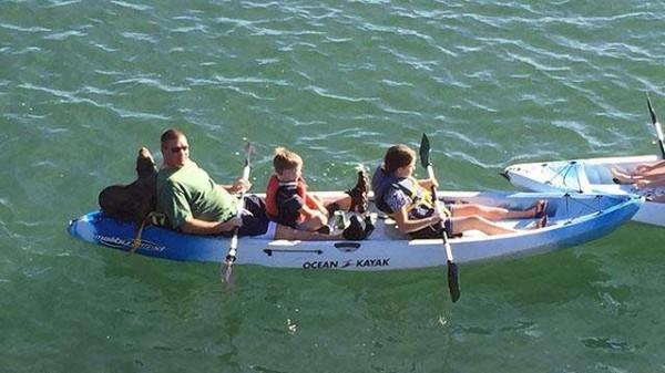 sea lion kayaking