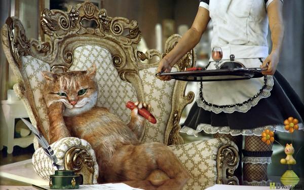 spoiled cat 1